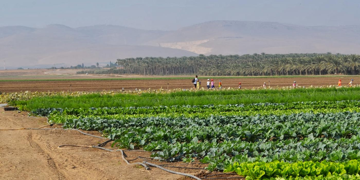 Modern Kibbutz agriculture in Galilee